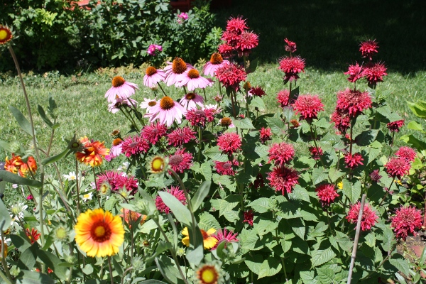 Bee Balm, Cone Flower and Blanket Flower